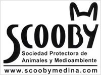 Image Logo Protectora de. Animais de Palencia